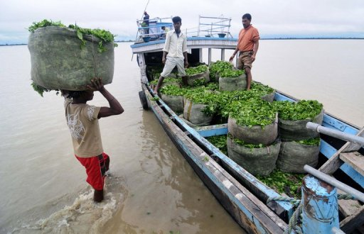 Assam has been flooded three times in the last four months by the Brahmaputra River AFP, Biju Boro