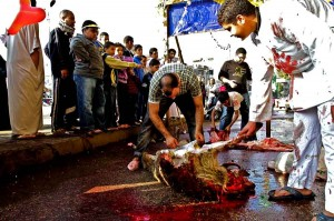 An animal is ritually slaughtered during celebrations for Eid Al-Adha (Photo by Hassan Ibrahim)