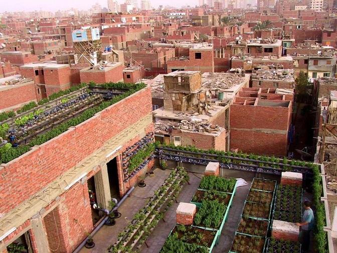 Shagara rooftop garden in one of Cairo's impoverished neighbourhoods Courtesy of Shagara Facebook page
