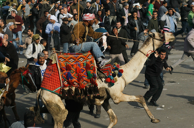 All suspects charged in connection with the 'battle of the camel' have been acquitted (AFP File photo)