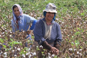 Women picking cotton in rural Egypt