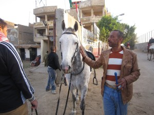 "Mahmoud Ahmed, standing besides ""the boss"", one of the two horses he sold to keep his business running Adham Roshdy"