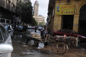 Donkey cart is unfased by the flooded street close to Maspero Ahmed Almalky