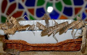 "A one-tonne swarm of locusts is capable of consuming ""the same amount of food in one day as about 10 elephants or 25 camels or 2,500 people"" said the FAO. (AFP Photo)"