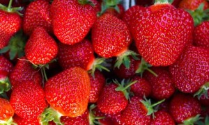 Egypt, the fourth largest producer of strawberries in the world, produced 240,000 tonnes of strawberries in 2010. The US Embassy valued strawberry production at $330m a year (AFP Photo)