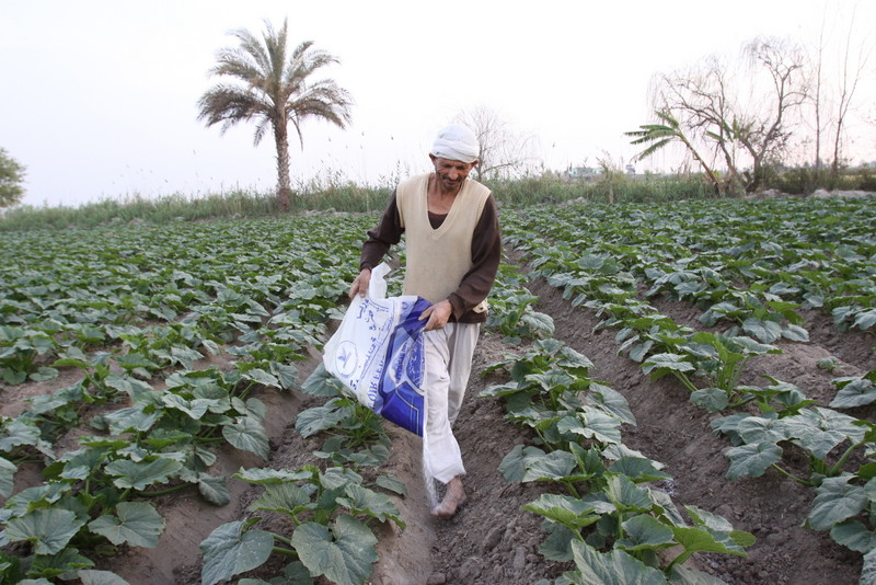 Farming egypt fertilizers