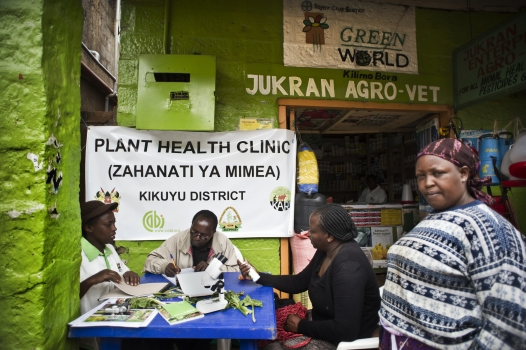 plant health clinic on market day in the village of Wangigi, Kenya. Farmers visiting the market can come to see a plant pathologist and show samples of their crops (Photo Courtesy of Africa Renewal )