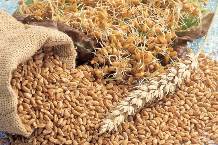 Finance ministry suggested raising wheat prices of local farmers, encouraging them to increase production (AFP Photo)