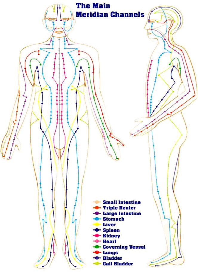 A diagram that shows energy paths in the human body (Photo Courtesy of Dr Ashraf El-Hanbaly)
