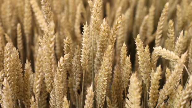 GASC purchased 175,000 tons of wheat from Romania, Russia and the United Stated (AFP Photo)