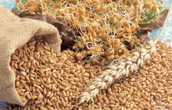ESC succeeded in increasing the production of wheat through obtaining 37 wheat ardebs per acre, despite the production per acre not exceeding 18 ardebs. (AFP Photo)