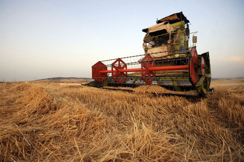 Egypt, the world's biggest wheat importer, rejected a Canadian wheat shipment from U.S.-based exporter CHS Inc. which failed criteria. (AFP PHOTO / Fethi Belaid)