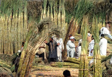Factories have contracted with farmers to pay EGP 400 per received sugar cane tonne (AFP photo)