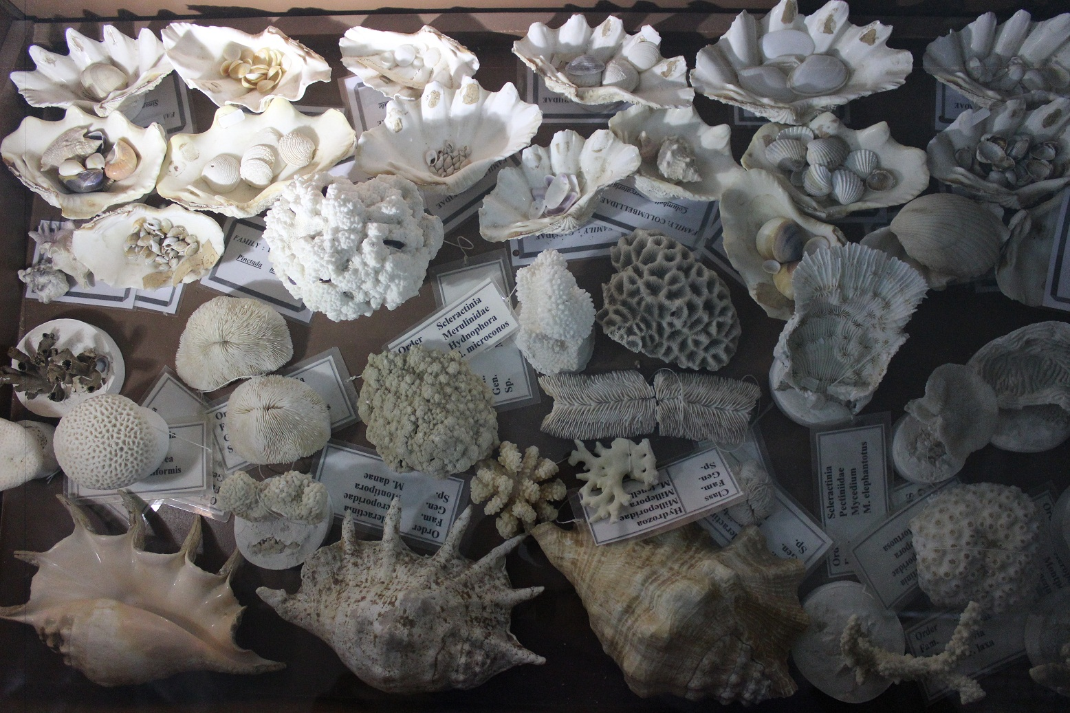 A collection of sea shells in the museum. (Photo by Aya Nader)