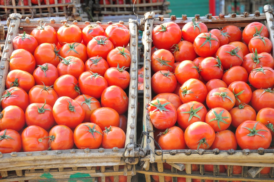 Paste & Juice injects EGP 30m to develop farming, harvesting methods - Daily News Egypt