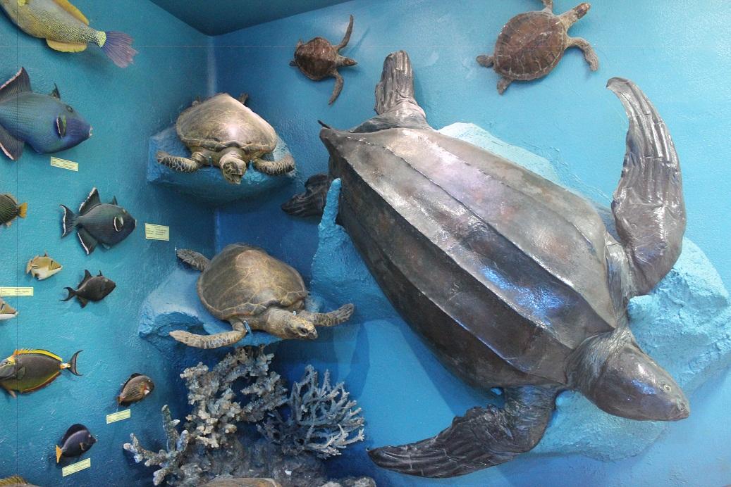 Two meter mummified turtle. (Photo by Aya Nader)