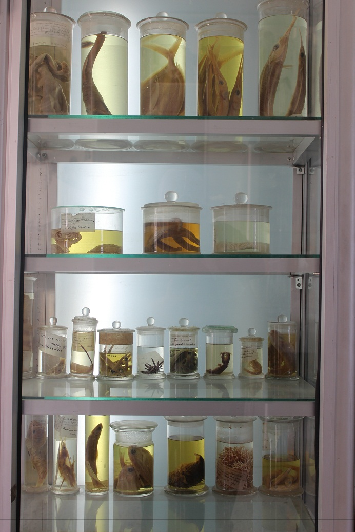 Various species preserved in formalin since the 1920s (Photo by Aya Nader)