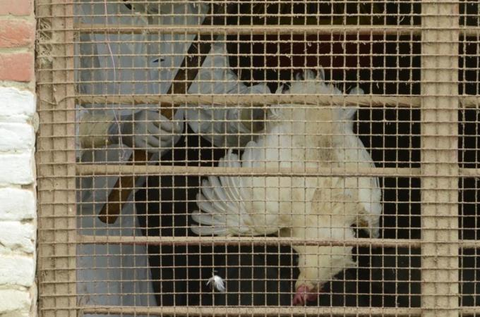The Ministry of Health announced Tuesday the death of a 31-year-old woman from Giza due to bird flu. (AFP File Photo)