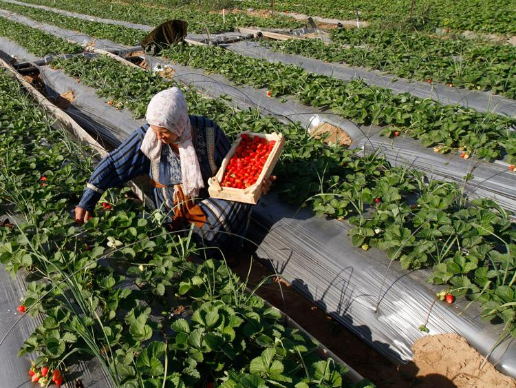 Egypt's agricultural exports to Russia amounted to $310mn in the 2013/2014 fiscal year (AFP Photo)
