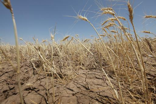 Global warming will reduce the world's crop production by up to two percent every decade and wreak $1.45 trillion of economic damage by the end of this century, according to a draft UN report  (Getty/AFP/File, Scott Olson)