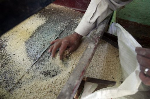 Jordan requested importing 20,000 tons of Egyptian rice (AFP Photo)