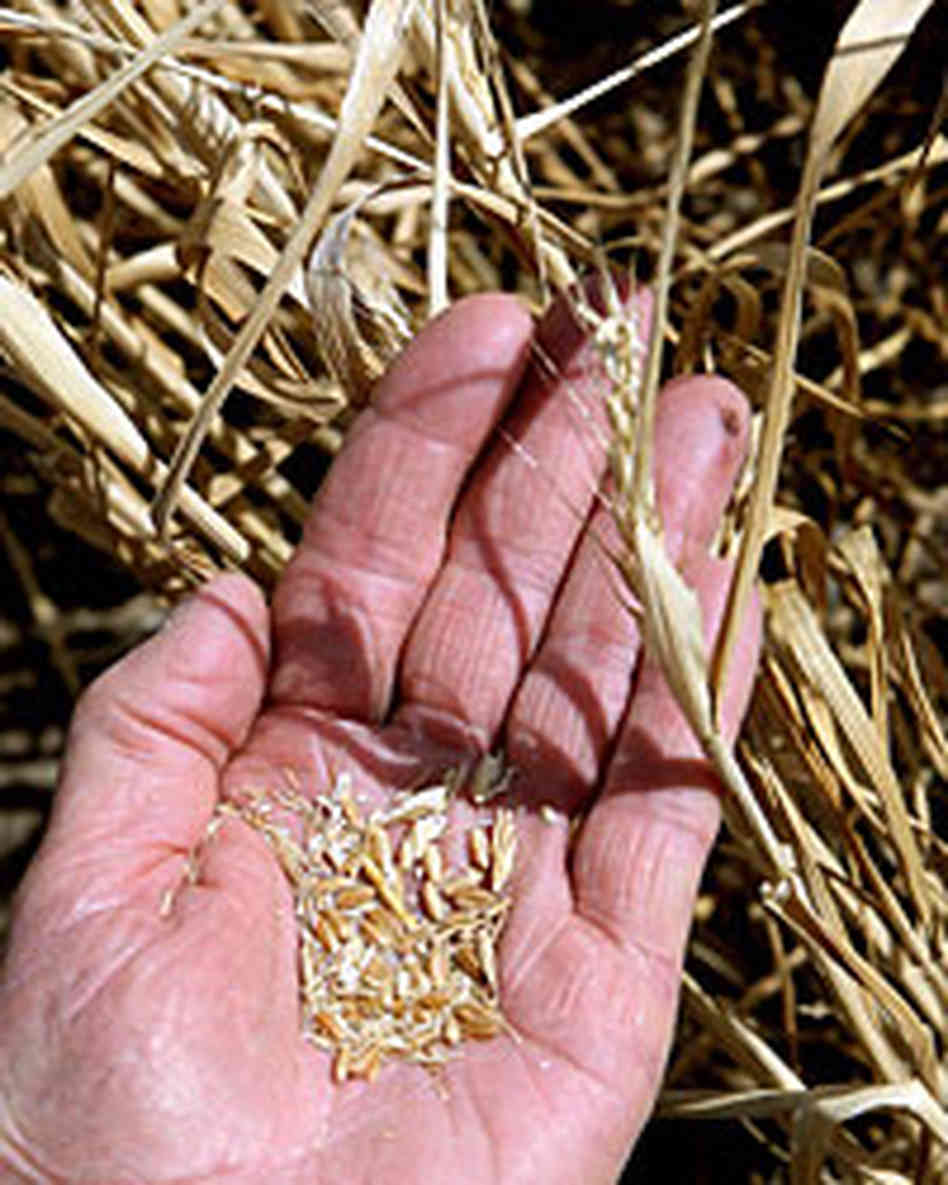 Egypt imports wheat from Ukrania and Romania to offset stock shortage.  AFP Photo