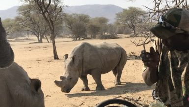 Namibia recorded 57 poaching cases in 2019, which comprised 46 rhinos and 13 elephants. (Xinhua-Sun Yin)