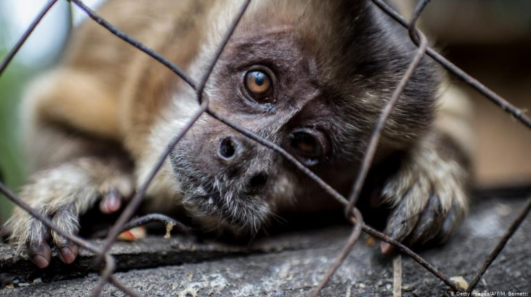 Global animal rights campaigners have called on the G20 leaders to end the inter-country wildlife trade in wild animals and wild animal products. Daily News Egypt