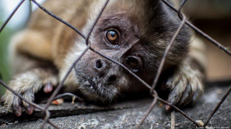يدعو النشطاء قادة مجموعة العشرين للمساعدة في إنهاء تجارة الحياة البرية