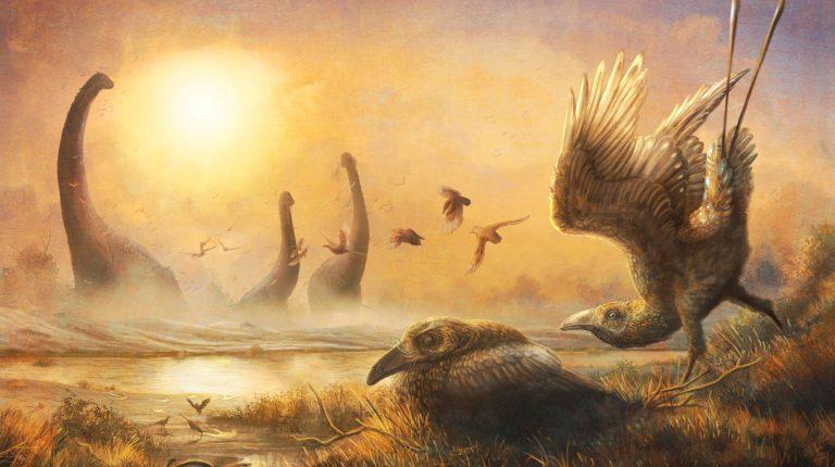 حفرية نادرة من العصر الطباشيري تكشف أسرار تطور الطيور