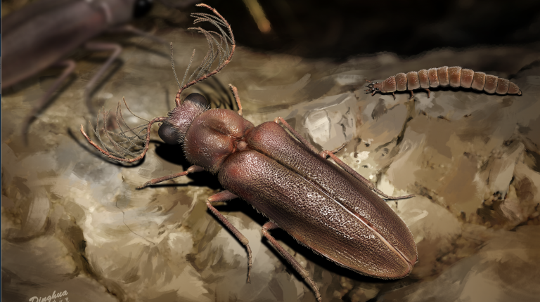Amber-encased fossil sheds light on evolution of bioluminescent insects