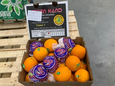 Brazil receives 1st shipments of Egyptian oranges after joint trade agreement