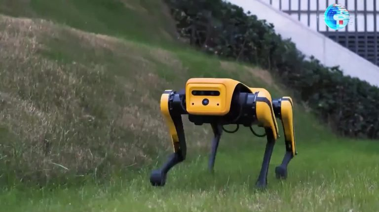 """A """"dog"""" with a smart brain! Chinese researchers have unveiled an upgraded four-legged robot."""