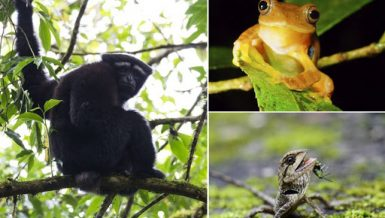 "Undated combo photo shows a ""Skywalker gibbon"" (L), a red-webbed tree frog (R, top) and a kind of wild tree lizard (R, bottom) in a biodiversity hotspot in Gaoligong Mountain National Nature Reserve, southwest China's Yunnan Province"
