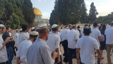 253 Zionist settlers storm Al-Aqsa despite Gaza's ceasefire agreement